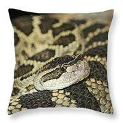 Coiled Rattlesnake Throw Pillow