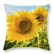 Colby Farms Sunflower Field Closeup Throw Pillow