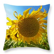 Colby Farms Sunflower Field Newbury Ma Ball Of Fire Throw Pillow