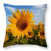 Colby Farms Sunflower Field Newbury Ma Sunrise Throw Pillow