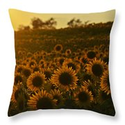 Colby Farms Sunflower Field Newbury Ma Sunset Throw Pillow