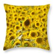Colby Farms Sunflower Field Newbury Ma Throw Pillow