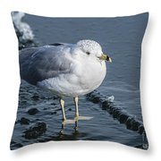 Cold Feet Throw Pillow