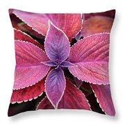 Coleus Red Rosie Throw Pillow