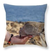 Collared Dove Feeding From A Hand Throw Pillow