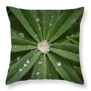 Collecting Rain Throw Pillow