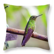 Colombian Hummingbird Throw Pillow