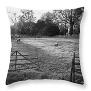 Colonial Sheep In Pasture Throw Pillow