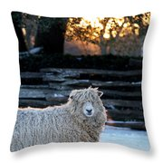 Colonial Sheep In Winter Throw Pillow