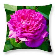 Color Of Rose Throw Pillow