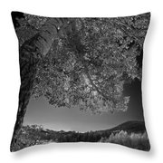 Colorado Aspen Black And White Throw Pillow by Dave Dilli