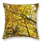 Colorado Aspens In Fall Throw Pillow