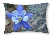 Colorado Columbine Throw Pillow