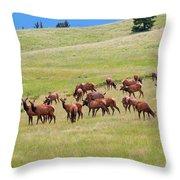 Colorado Elk Herd Throw Pillow