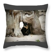 Colorado Giant Tortoise Throw Pillow
