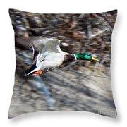 Colorado Mallard In Flight Throw Pillow