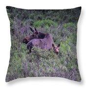Colorado Moose  Throw Pillow