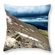 Colorado Mountain Goat Throw Pillow