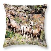 Colorado Mountain Sheep Throw Pillow