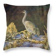 Colorado Sandhill Crane  Throw Pillow