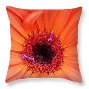 Colorburst Throw Pillow