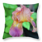 Colored Iris  Throw Pillow