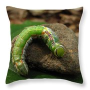 Colorful Caterpillar  Throw Pillow