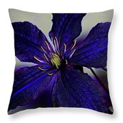 Colorful Clematis Throw Pillow