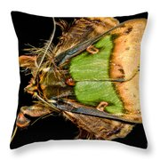 Colorful Cryptic Moth Throw Pillow