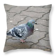 Colorful Dove Throw Pillow