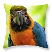 Colorful Gaze Throw Pillow