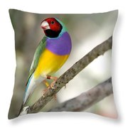 Colorful Gouldian Finch Throw Pillow