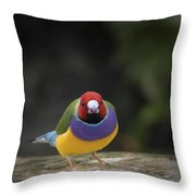 Colorful Guilian Finch And The Plain Bird Throw Pillow
