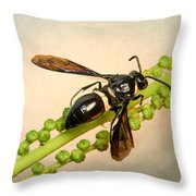 Colorful Hymenop 1 Throw Pillow