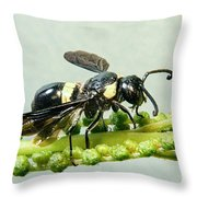 Colorful Hymenop 2 Throw Pillow