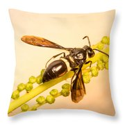 Colorful Hymenop 4 Throw Pillow