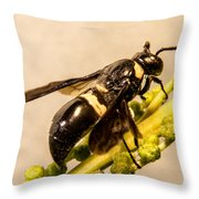 Colorful Hymenop 5 Throw Pillow