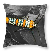 Colorful Insect - Ornate Bella Moth Throw Pillow