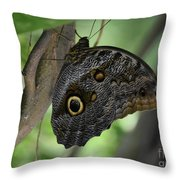 Colorful Markings On A Blue Morpho Butterfly On A Tree Trunk Throw Pillow