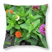 Colorful Pink And Orange Flowers In Green Leaves Bush In The Garden. Throw Pillow