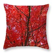 Colorful Red Orange Fall Tree Leaves Art Prints Autumn Throw Pillow