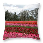 Colorful Tulips Blooming At Tulip Festival Throw Pillow