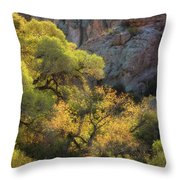 Colors Of Autumn In The Sonoran  Throw Pillow