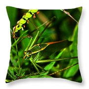 Colors Of Nature - Green Katydid 001 Throw Pillow