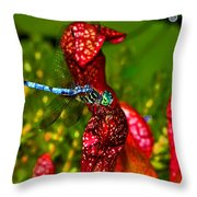 Colors Of Nature - Profile Of A Dragonfly 003 Throw Pillow