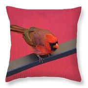 Colour Me Red - Northern Cardinal - Cardinalis Cardinalis Throw Pillow