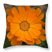 Colourful Orange Signet Marigold  Throw Pillow