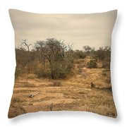 Colourful Safari Throw Pillow