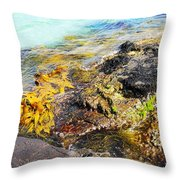 Colourful Sea Life - Fishers Point Throw Pillow