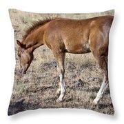 Colt 015 Throw Pillow